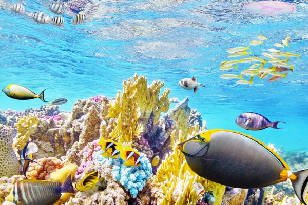 The marine fauna that hides the Great Barrier Reef. Which of all is your favorite animal?