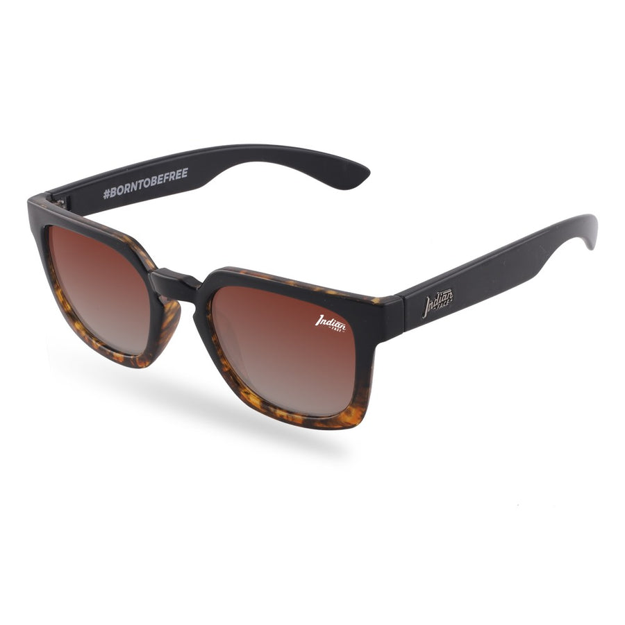 Tarifa Tortoise / Brown