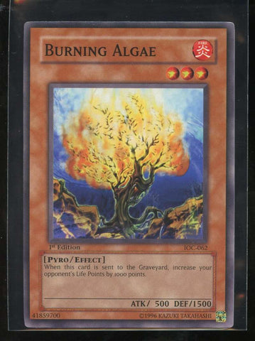 Burning Algae 1st Edition IOC-062 Yugioh! Invasion of Chaos NM-MT