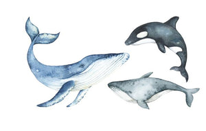 watercolour-whale-removable-wall-decals-ginger-monkey-childrens-decor-faith-laine