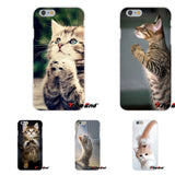PRAYING KITTENS FOR iPHONE - FREE OFFER - Free + Shipping