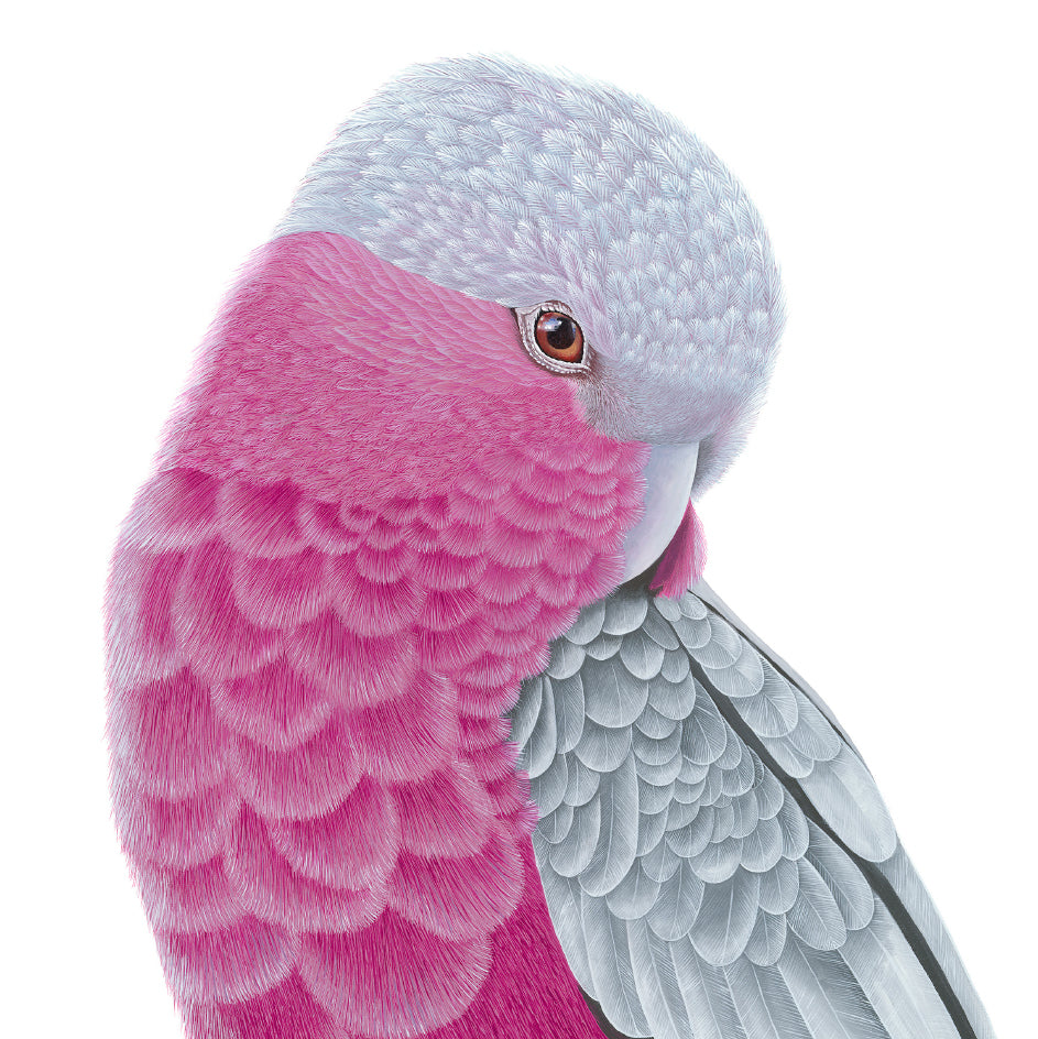 Gift Card - Pink & Grey Galah