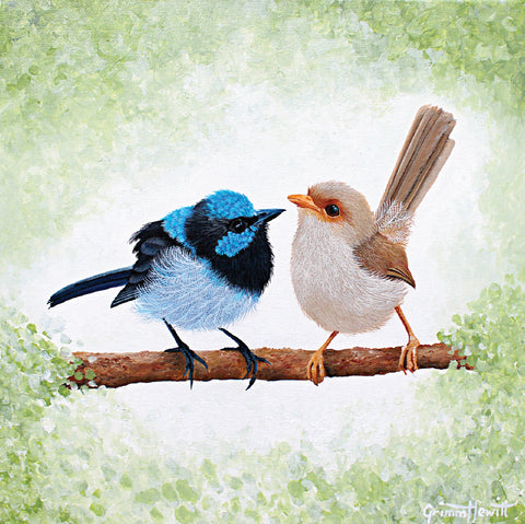 Gift Card - Superb Fairy Wrens