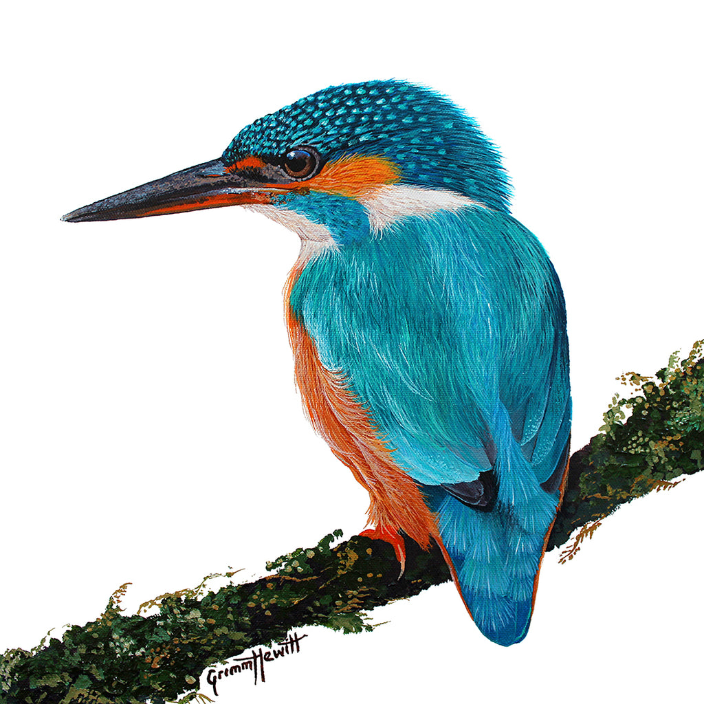Bird - Sacred Kingfisher Back