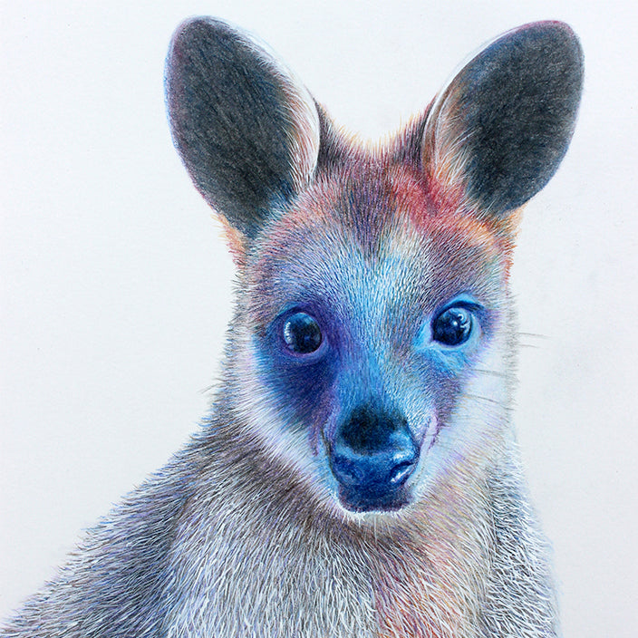'Swamp Wallaby'