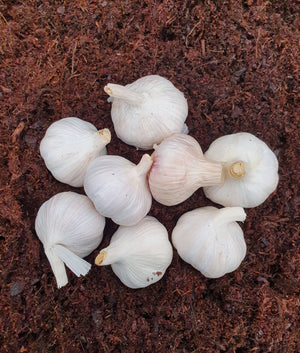 Hosta Garlic Wash Recipe