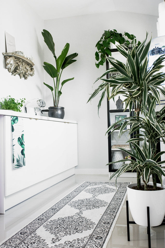 Bright white kitchen interior with oriental rug and plants