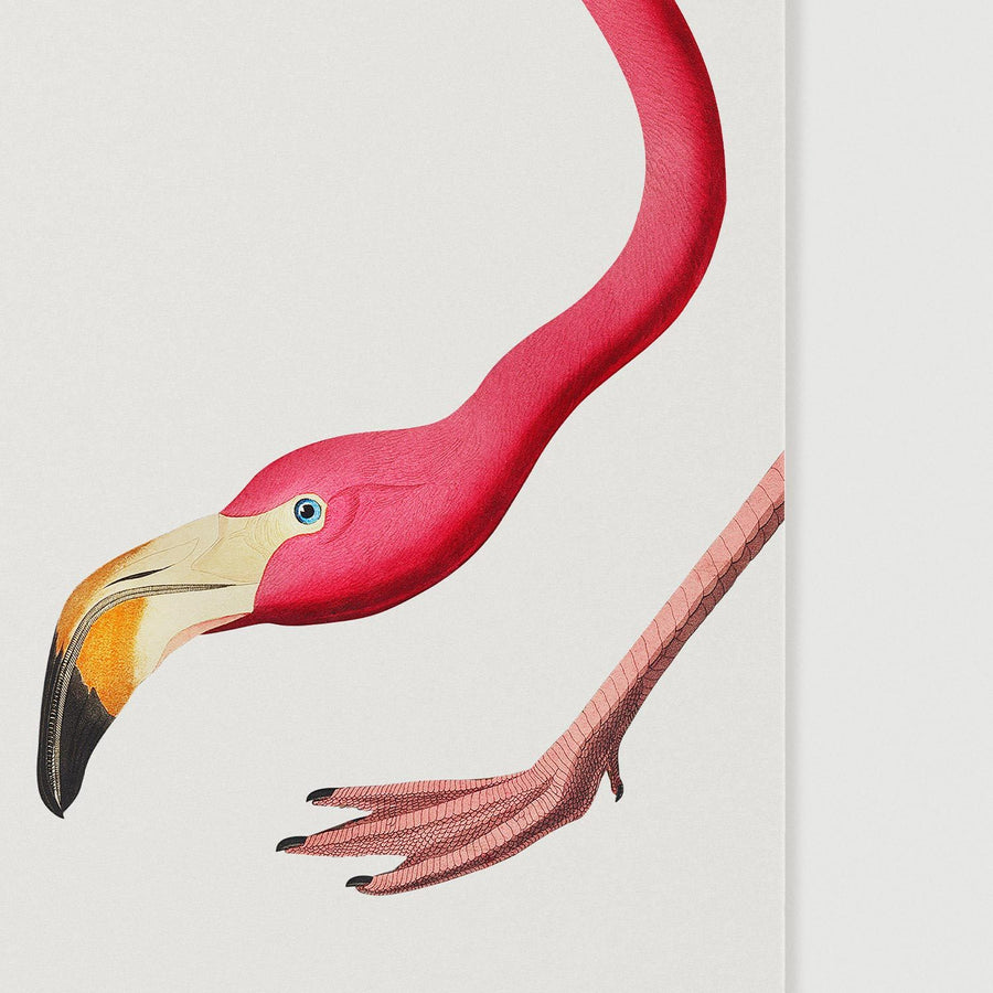 Pink flamingo poster close up