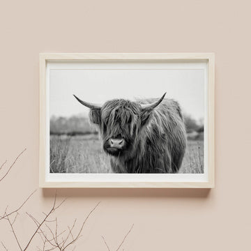 Bison photography poster