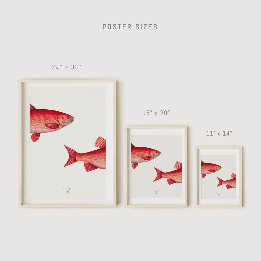 Wall decor with fish print