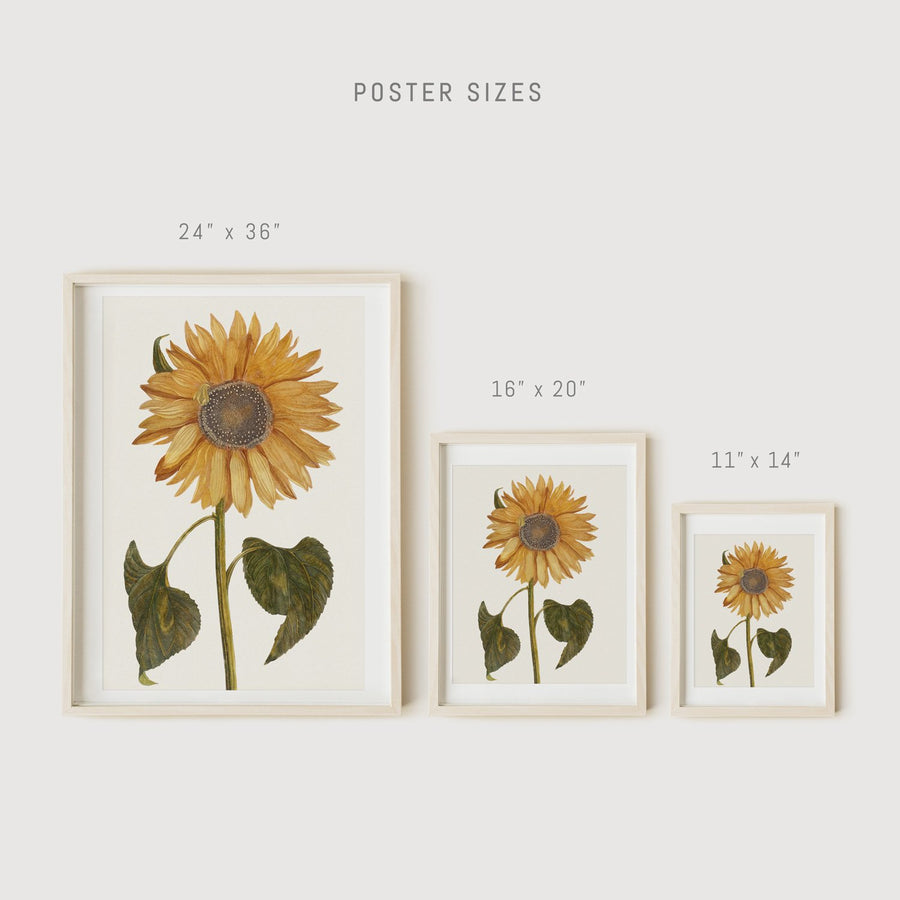 Botanical sunflower posters