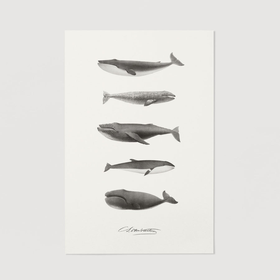 Nautical poster with whale