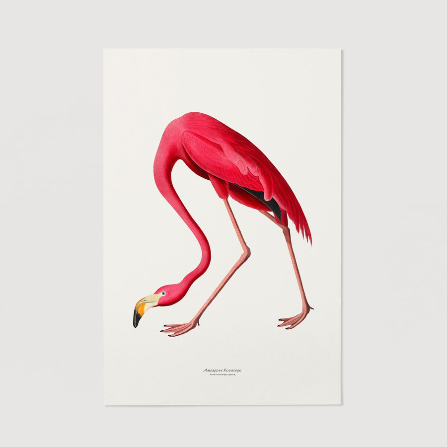 Pink Flamingo print wall art
