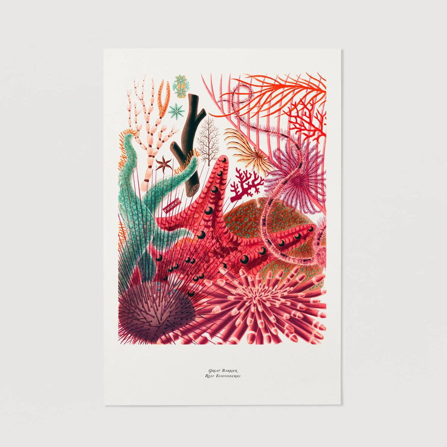 Beautiful coral illustration wall print