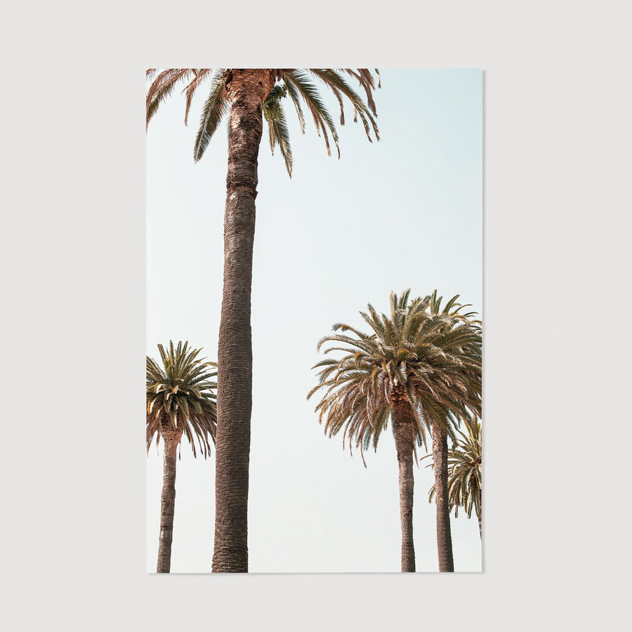 photography print with palms