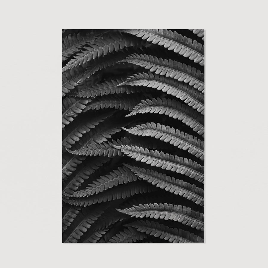 Large Fern poster black & white color