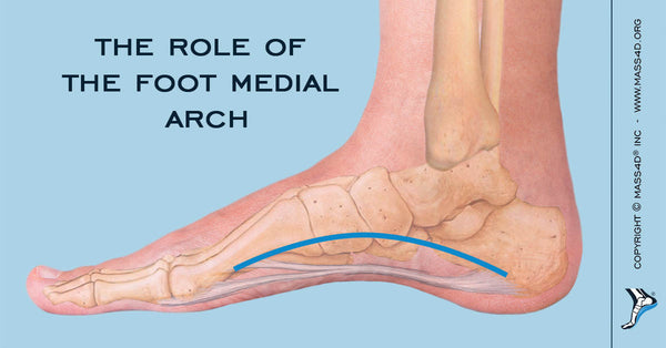 What Is the Medial Arch and What Does it Do? - MASS4D® Insoles and ...