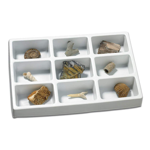 KIT PALEONTOLOGIE - FOSILE - EDUCATIONAL INSIGHTS (EI-5204) Libelula Vesela