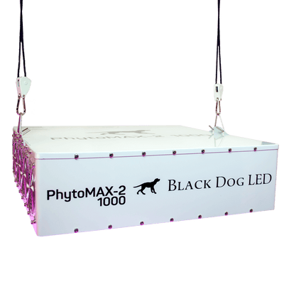 Black Dog Hanging phytomax-2 1000