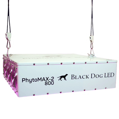 Black Dog front view phytomax-2 800 Hanging