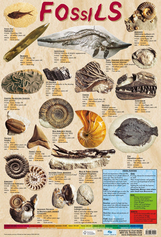 Poster 60cm x 40cm - Fossils