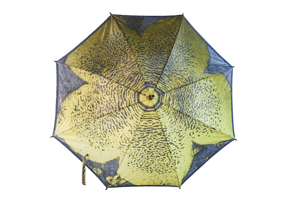 Stapelia Umbrella