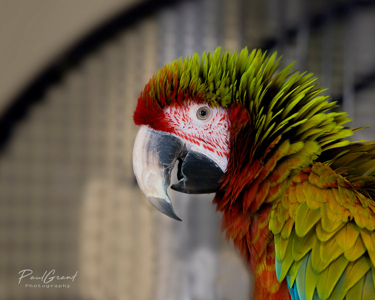 Meet Our Feathered Charity Partner, Parrot Partner!