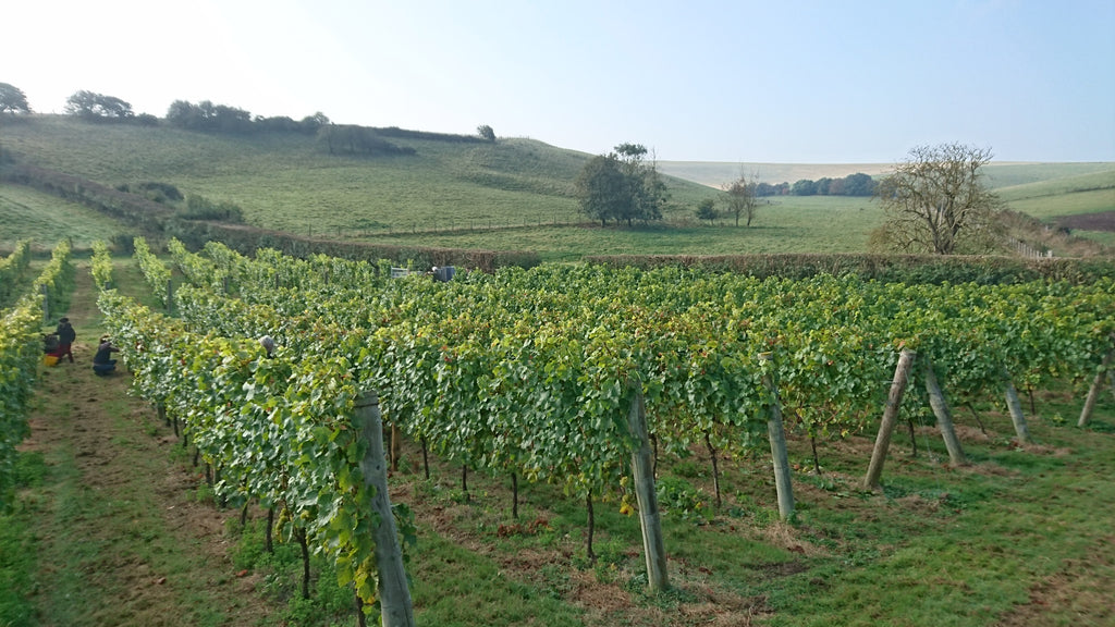 Sussex Sparkling Wine starts process for EU Geographical Recognition, the same as Champagne and Prosecco