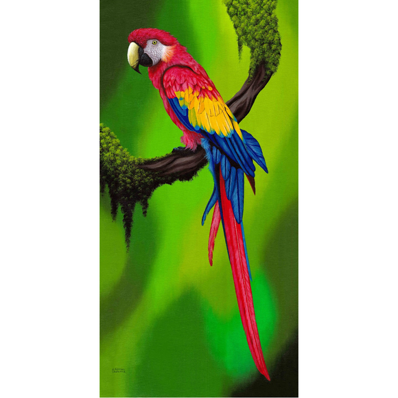 Giclee Art Work - Red Parrot on Branch - Congo Costa Rica