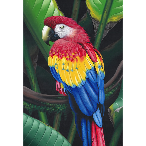 Giclee Art Work - Red Parrot in the Jungle - Congo Costa Rica