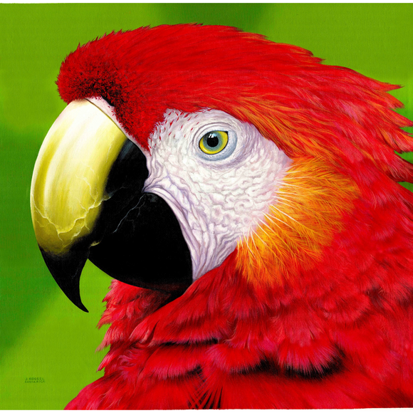 Giclee Art Work - Red Parrot Portrait - Congo Costa Rica