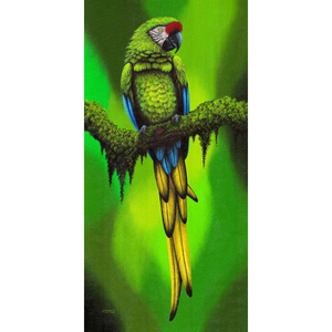 Giclee Art Work - Green Parrot on Branch - Congo Costa Rica