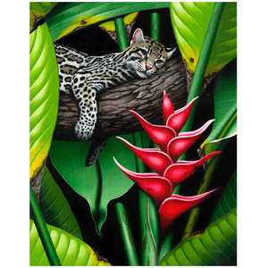 Giclee Art Work - Sleeping Ocelot - Congo Costa Rica