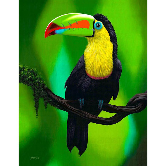 Giclee Art Work - Toucan - Congo Costa Rica