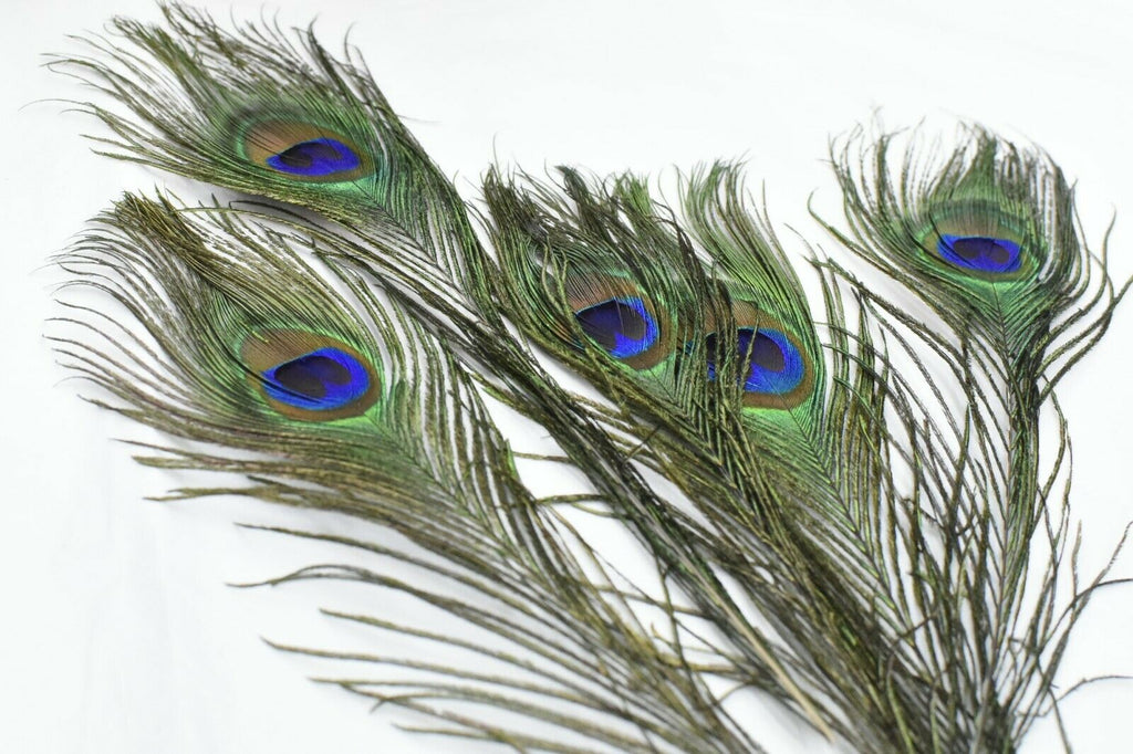 Long Fascinators Peacock Feathers Millinery Hats Trimmings
