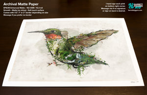 Ruby Throated Hummingbird - Archival Prints