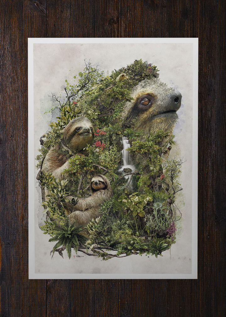 The Sloth of the Jungle - Archival Prints