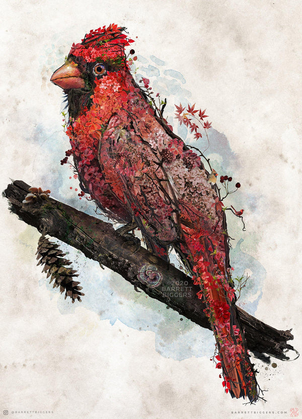 Northern Cardinal - Archival Prints and Canvas