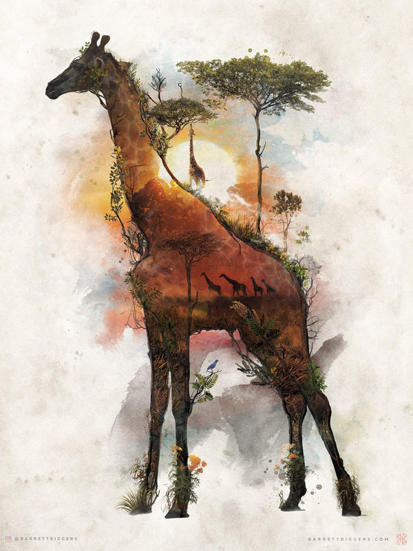 African Giraffe - Archival Prints and Canvas