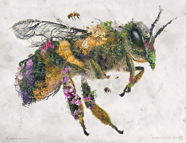 The Honey Bee - Archival Prints and Canvas Options