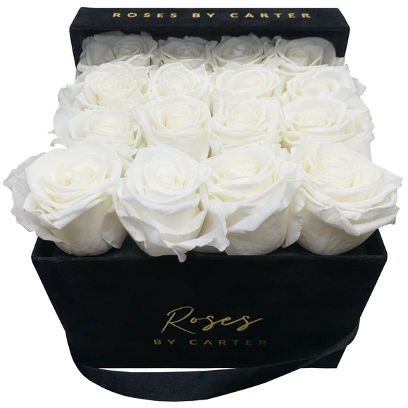 Black Velvet - Pure White 1 Year Roses