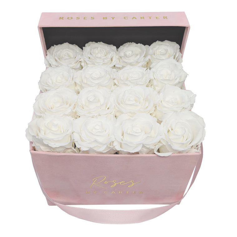 Pink Velvet - Pure White 1 Year Roses