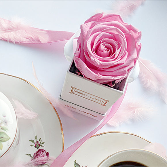 White Single Collection - Baby Pink Rose
