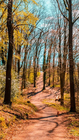 Best Hiking Trails You Need to Backpack To