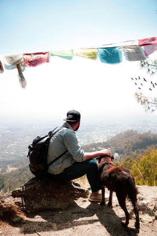 4 Things to Keep In Mind When Hiking With Your Dog