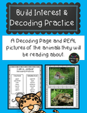 Rainforest (rain forest) phonics and decoding activities.