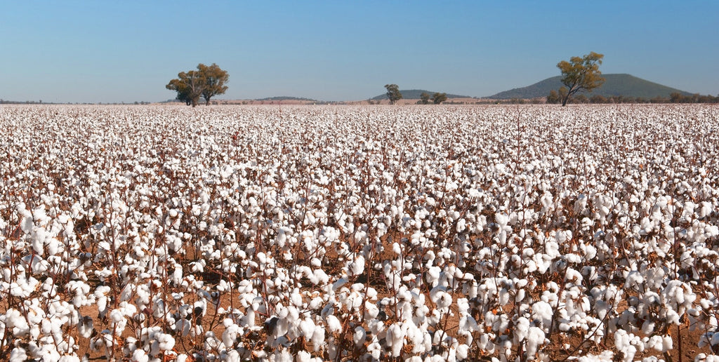 Is cotton good for you and the planet?