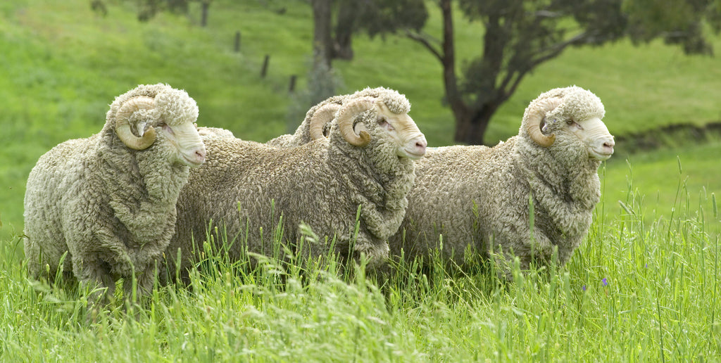 WHY WE CHOOSE RECYCLED WOOL OVER VIRGIN WOOL – AND WHY YOU SHOULD TOO!