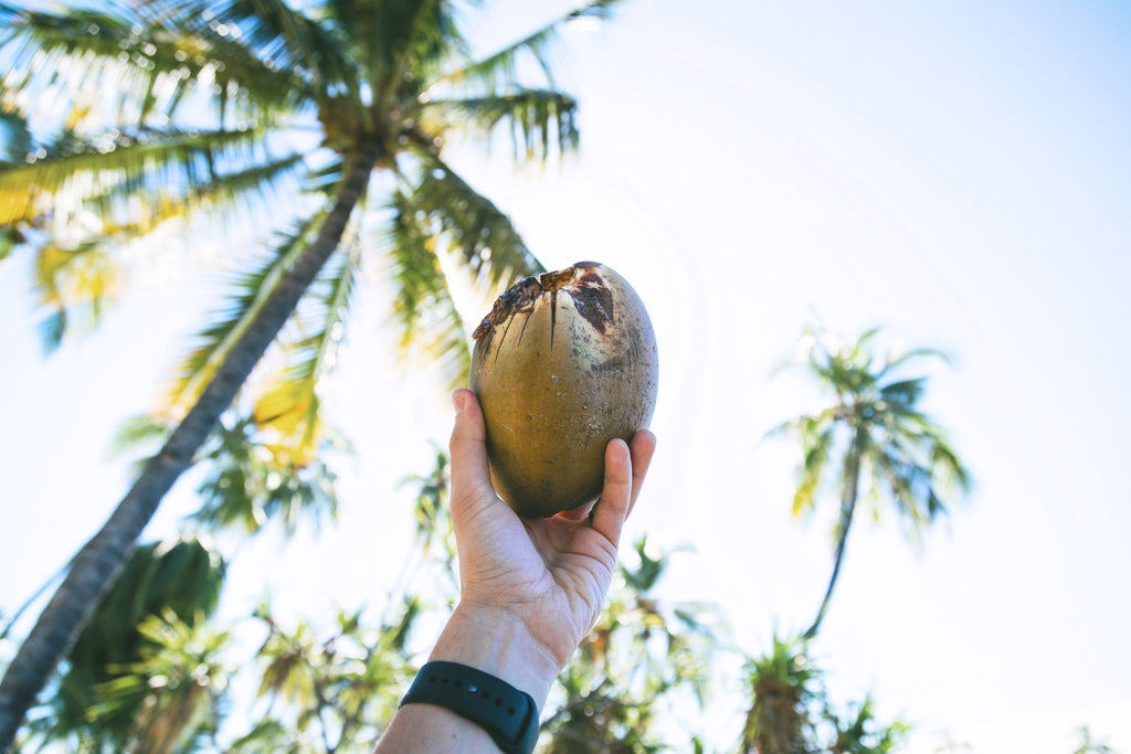 Spiritual Warrior Healthy Living Coconut Benefits