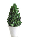 Boxwood Topiary Tree in Clay Pot
